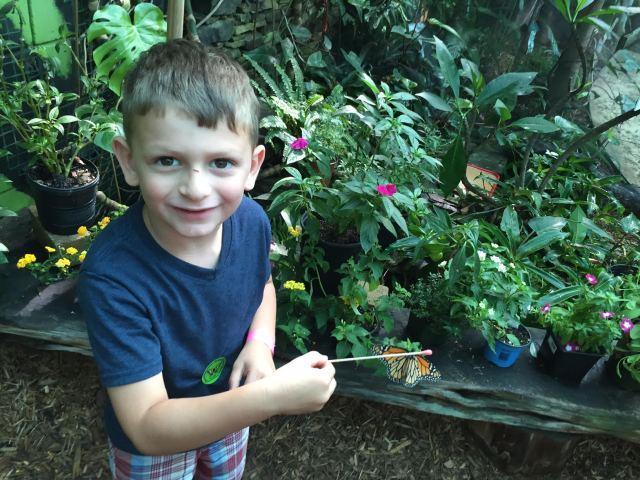 butterfly adventure 3