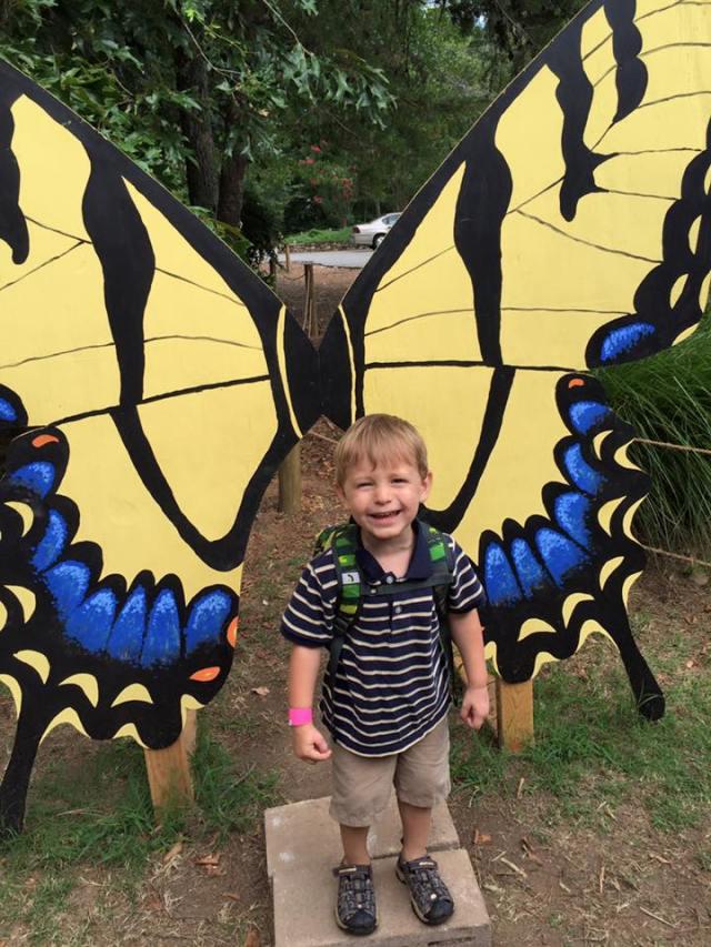 butterfly adventure henry